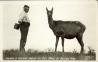 Warden D. Davison and his pet elk Maud at Buffalo Park. [Wainwright: Photo Carsell, Wainwright, Alberta, 1920]. Courtesy of Peel's Prairie Provinces.